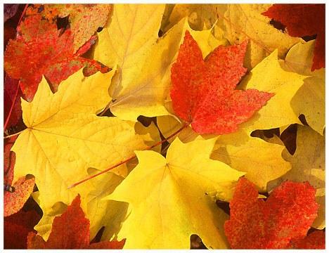 leaves.bmp